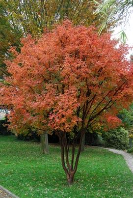 Recherche arbre pour mon jardin for Quel arbre pour mon jardin