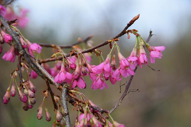 hellébores fleurs artificielles